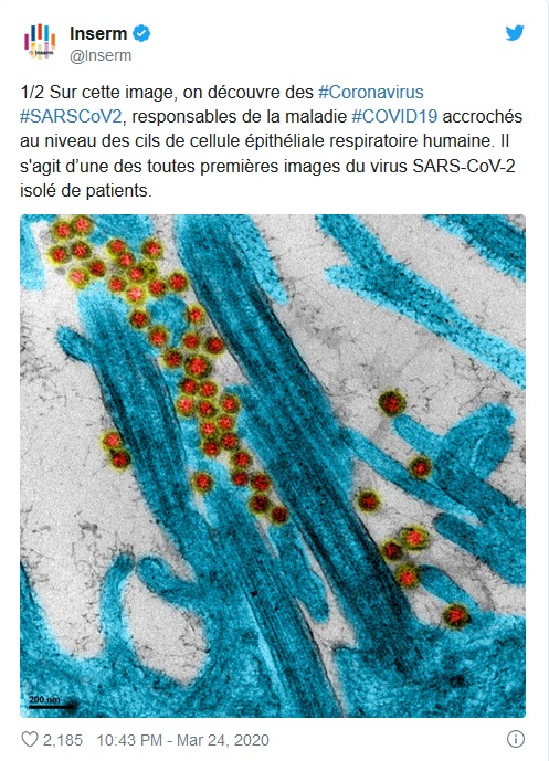 Pour des politiques de l'amphibiose (la guerre contre les virus n'aura pas lieu)