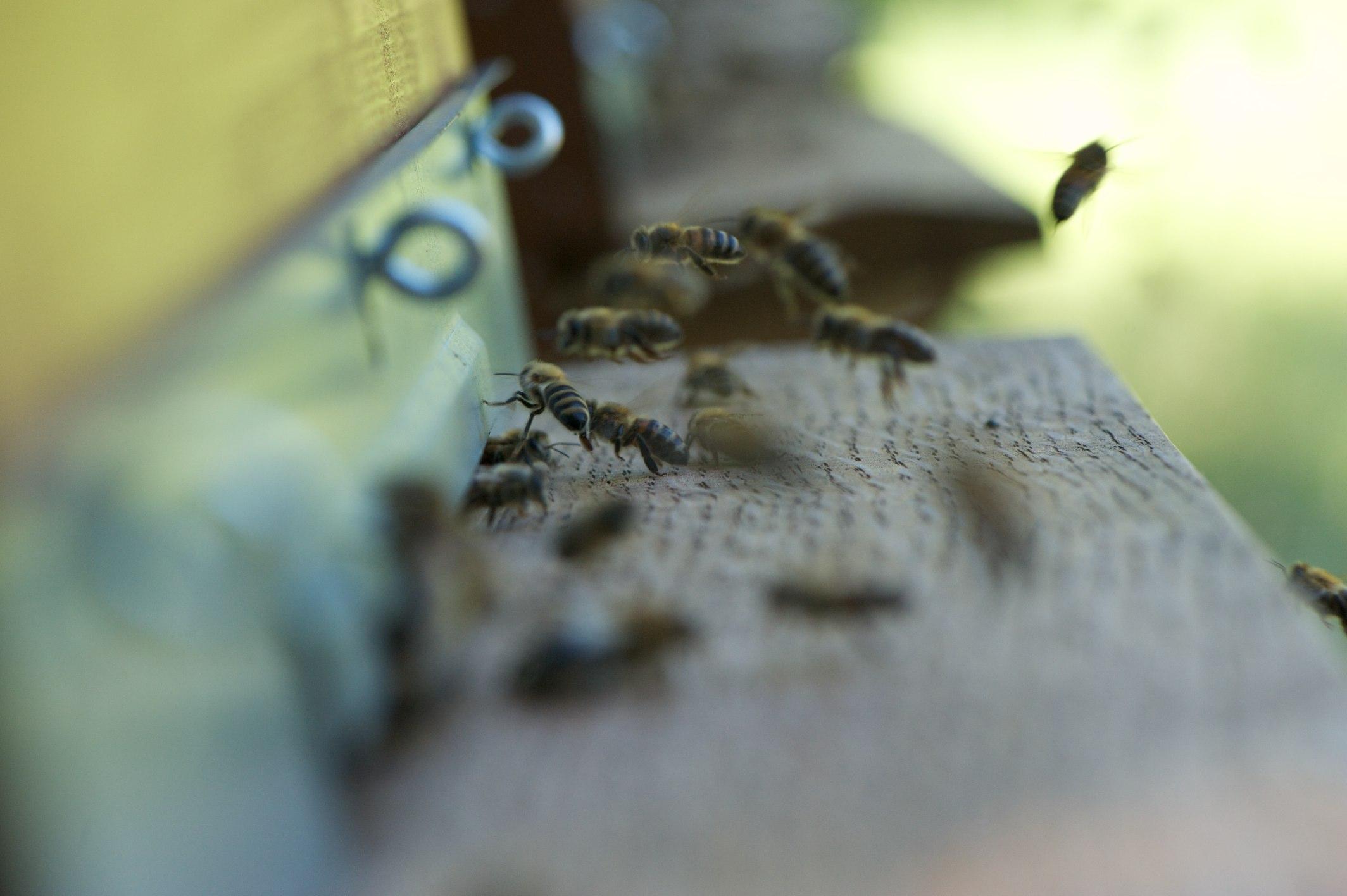 Pesticides: pas de trêve pour les tueurs d'abeilles